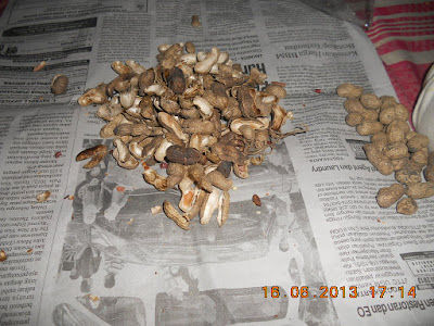Yang Membuat Kotor Itu Manusia, Bukan Kulit Kacang