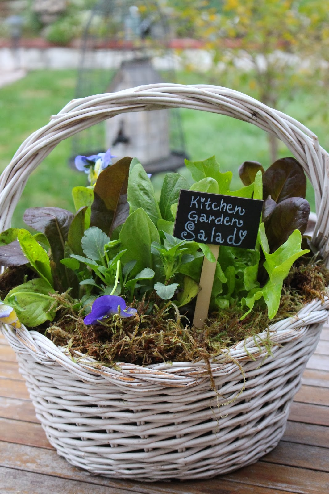 Rooted in thyme making kitchen garden salad baskets for for Making a kitchen garden
