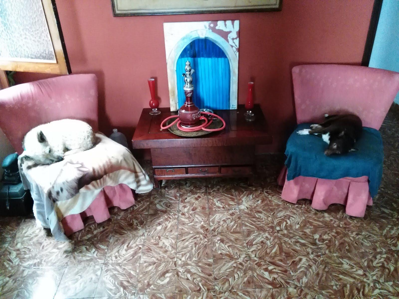 """LUNA (blanca) y CHINA (marrón) en sus tronos: versión """"pongo pause"""""""