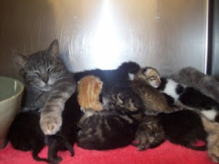 5/20/ On HappyTailsList  5/7/11 Mommas and  Babies. Lots of Other Nice Cats and Kittens   at the AC