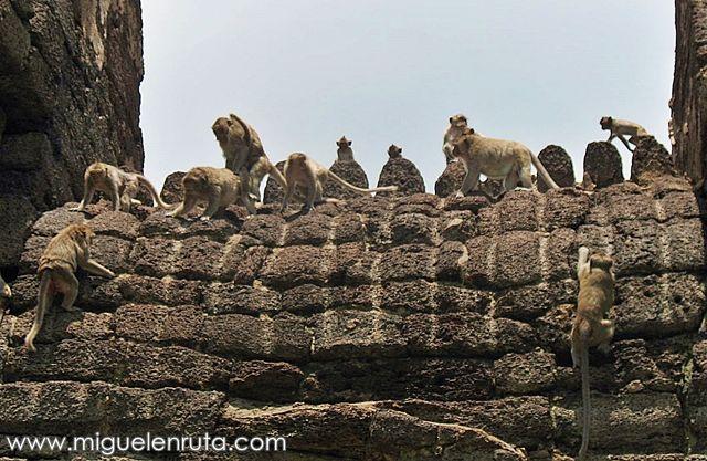 Macacos-templo-Lopburi