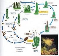 Pertumbuhan dan Perkembangan Makhluk Hidup