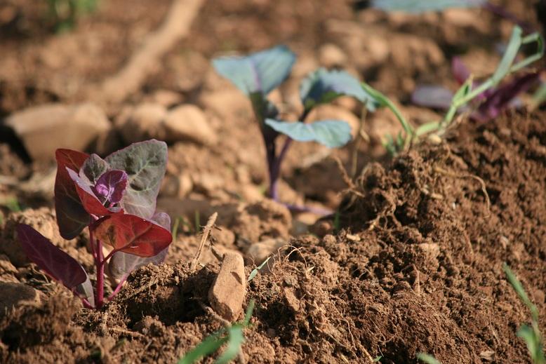 Le temps des l gumes le jardin au fil des saisons for Le jardin des 4 saisons albi