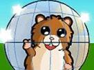 Hamster Yarışı Oyunu