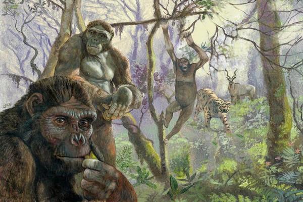 Resultado de imagen de Hace unos cinco millones de años, a comienzos del Pleistoceno, el período que siguió al Mioceno, en los bosques que entonces ocupaban África oriental, más concretamente en la zona correspondiente a lo que hoy es Kenia, Etiopía y Nigeria