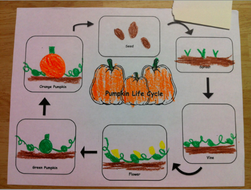 Kindergarten Kids At Play Pumpkin Activities Free pumpkin – Life Cycle of a Pumpkin Worksheet
