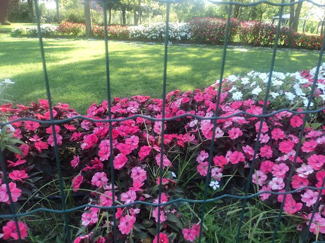 Flowery Glory