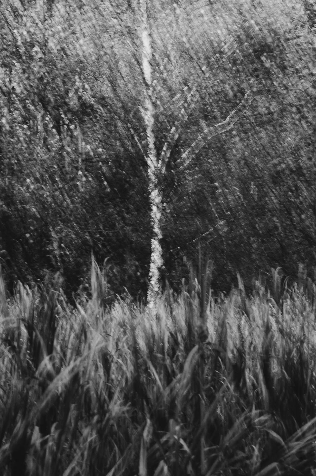 Koncepcyjna fotografia krajobrazu. Drzewo. fot. Łukasz Cyrus. Ruda Śląska
