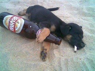 Drunk Dog