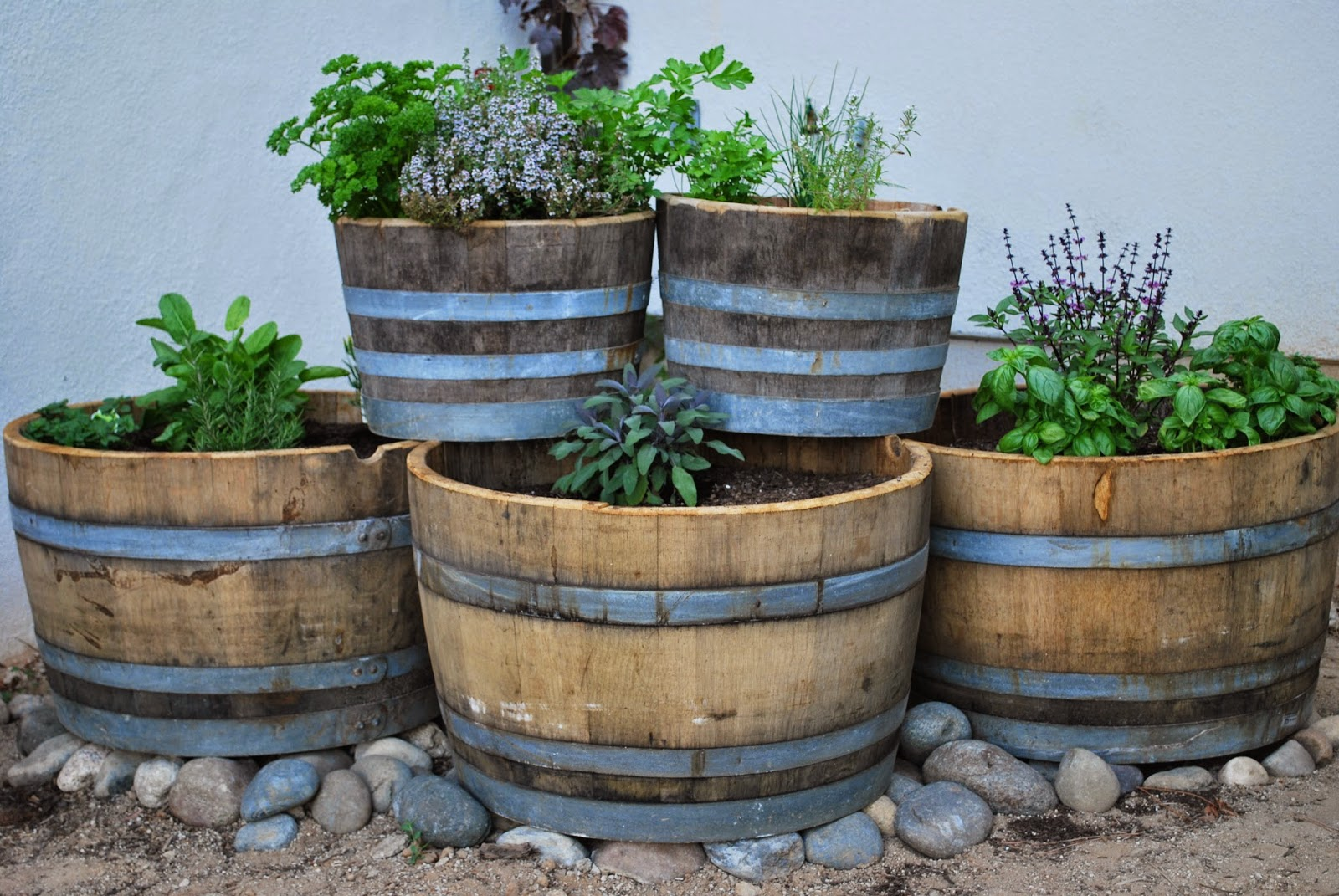 ogródek zioła