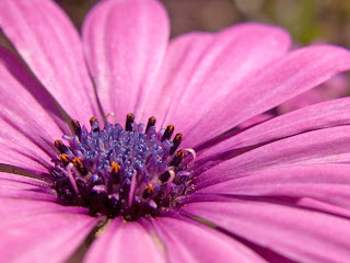 Cvijet slike besplatne pozadine za desktop download