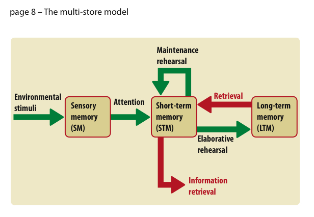 multi store model of memory Multi-store model of memory questions q1 according to the multi-store model of  memory, there are several ways in which short-term memory and long-term.
