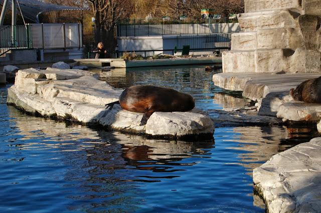 wiedeńskie Zoo