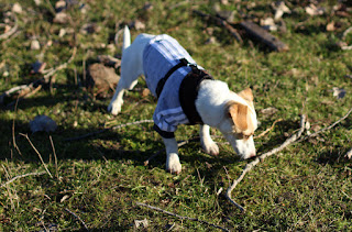 Thelma nudging the stick she has chosen to play with