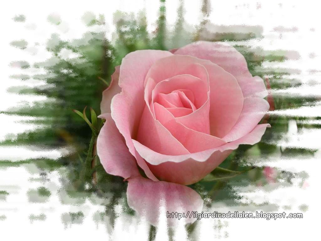 Immagini di fiori belli mf93 regardsdefemmes for Progetta il mio mazzo