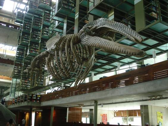 Las Bibliotecas M S Hermosas Del Mundo Pop Picture