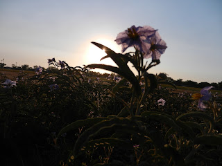 morning prairie flowers
