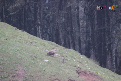 Vulture and crow in chillax mode