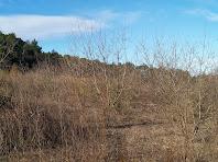 El Pla de Sant Jaume ple d'antics conreus d'ametllers, avui totalment abandonats