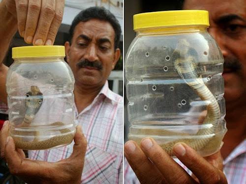 Veja a cobra que matou mais de 50 mil pessoas da África!