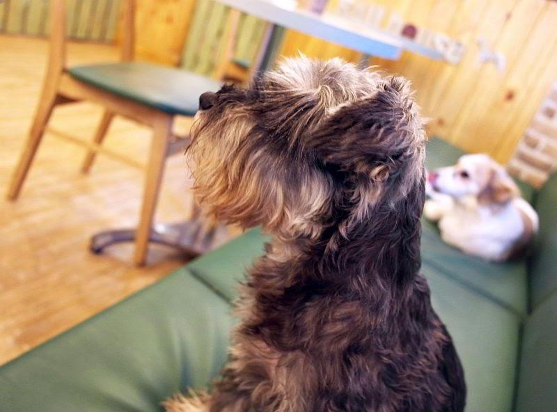 Bau House Dog Cafe