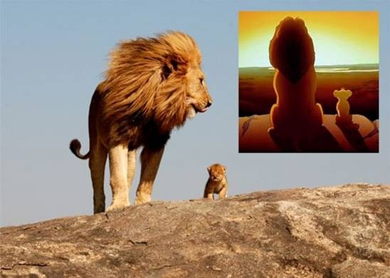 Finding Africa The Lion King Based On A True Story