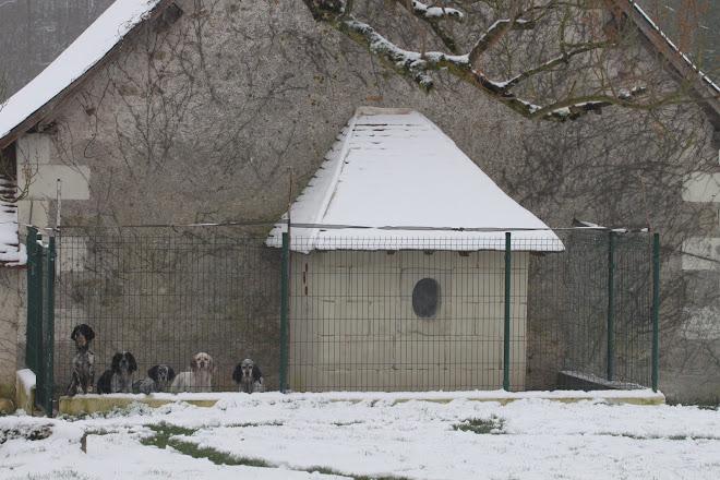 Le chenil en hiver !