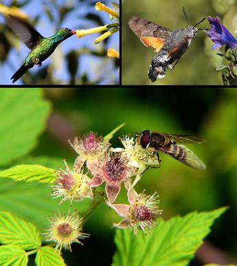 Reproducci n de las plantas los tipos de polinizaci n - Plantas para ahuyentar insectos ...