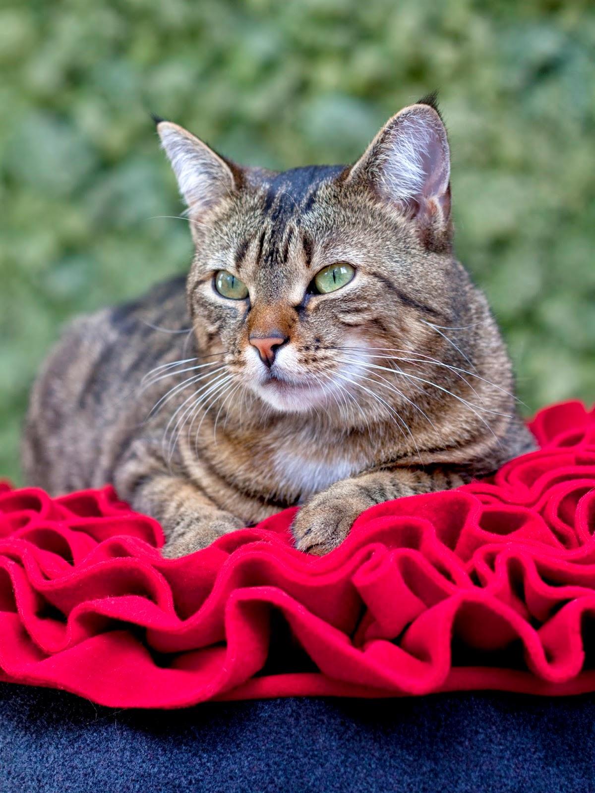 Gatos en casa for Cama para gatos