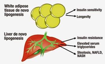 triệu chứng bệnh gan nhiễm mỡ