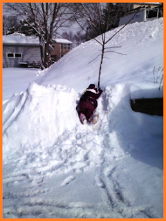 Child in snowsuit and coat, clinging to a small tree while atop a snowdrift beside the shoveled driveway