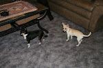 Cousin's Roxy & Luna