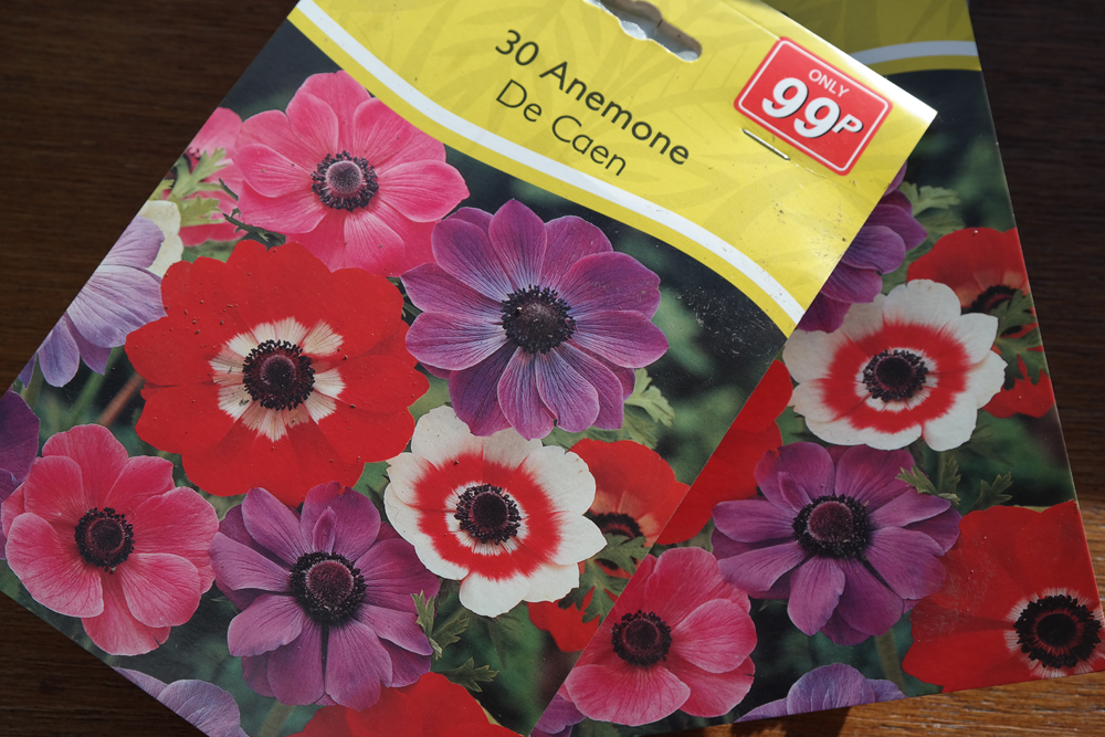 Anemone seed packets