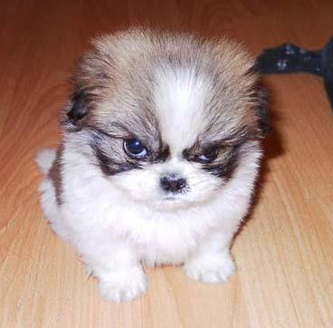 animals Por que o Comportamento Agressivo do Cão