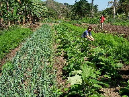 Bussines Peluang Usaha Pertanian Organik