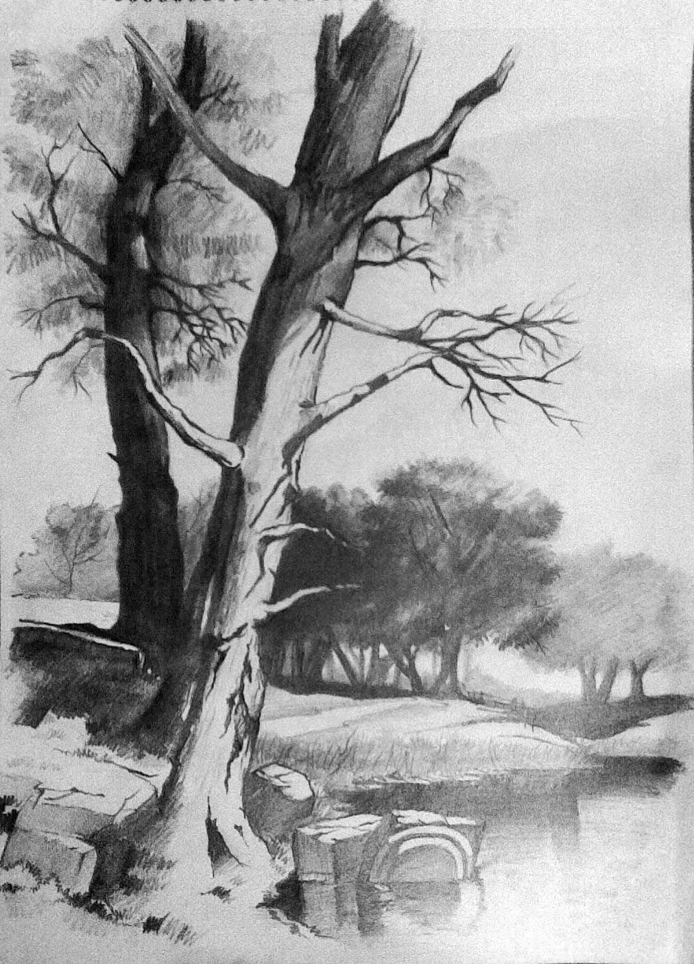 Pencil and canvas landscape in pencil for Beautiful drawings of trees