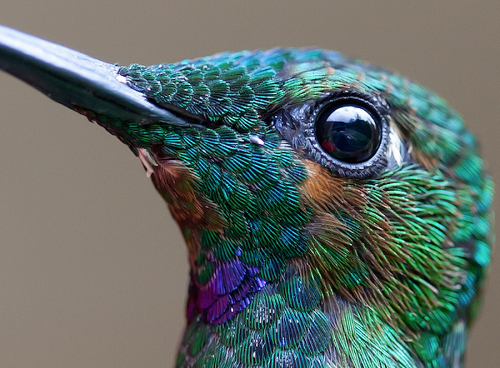 11 High-Res Photos Of Hummingbirds That Will Leave You Breathless