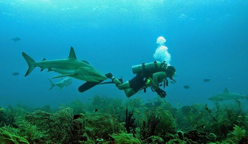 Sharkmonth