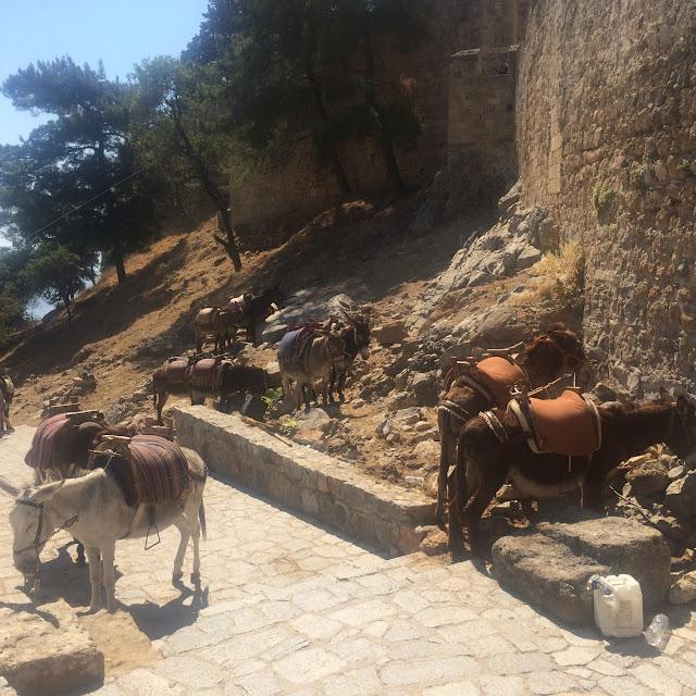 "Donkeys (""Lindos taxi"") in Lindos, Rhodes, Greece"