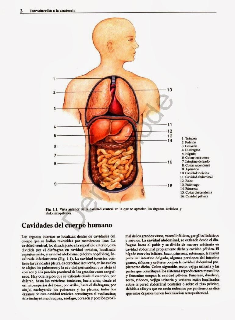 Atlas.Fotografico.de.Anatomia.del.Cuerpo.Humano.3era.Edicion ...