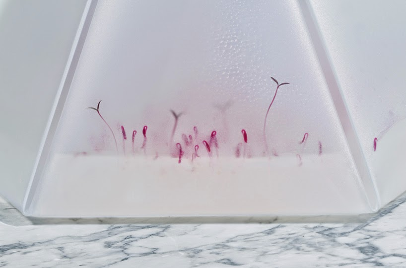 Microgarden Mini Invernadero para Interiores, Soluciones Ecologicas para Cultivar