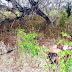 Criança de três anos é raptada e morta a golpes de facão no município de Ipirá