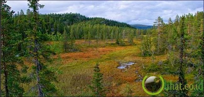 Hutan Trillemarka – Rollagsfjell