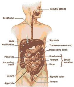 blok 10 sistem digestive