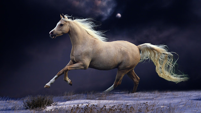 white_horse_running_in_the_night-wallpaper_hd