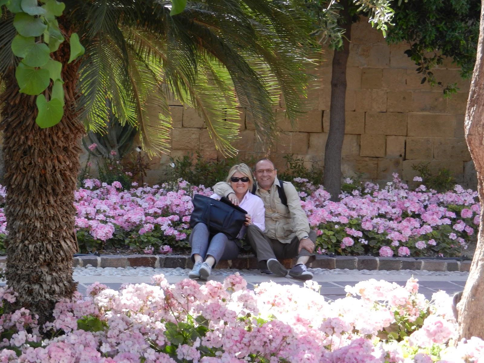 Kiraz Sıradan - Bahar Bahçesi Kraliçesi