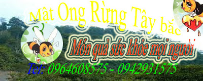 Mt Ong Rng Ty bc - Tel: 0964608575 - 0942931575