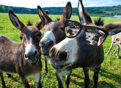 Khloe Kardashian ugly mule funny Armenia