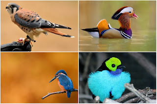 different birds from around the world