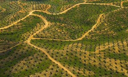 Proyecto de Forestación - Plantacion